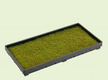 サンモトレー屋上緑化用の砂苔